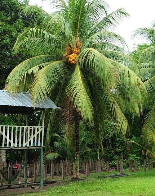 亚马逊探险之旅:大水域 小故事