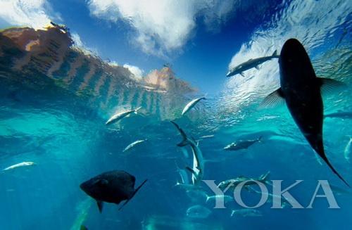 壁纸 海底 海底世界 海洋馆 水族馆 500_327