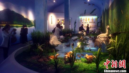 图为游客参观自然展览馆中的生物馆。中新社发 张畅 摄