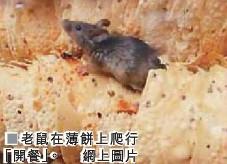 香港咖喱店惊现老鼠曾连获米其林推荐