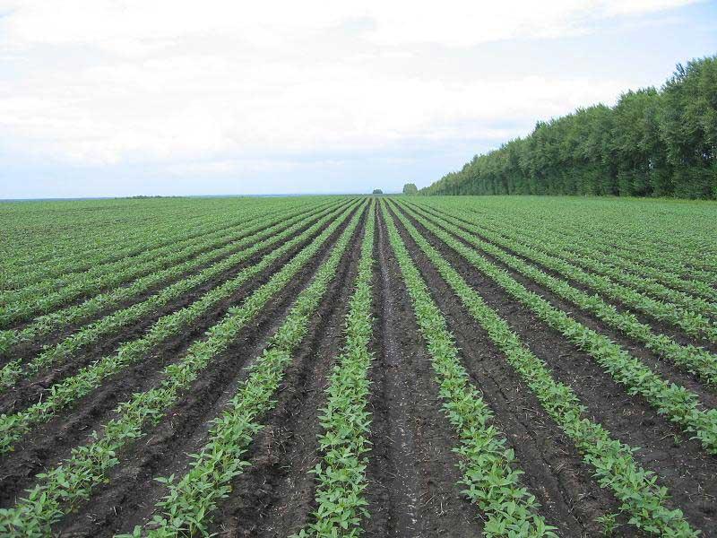 提高大豆单产抵御进口大豆冲击是专家一致的意见