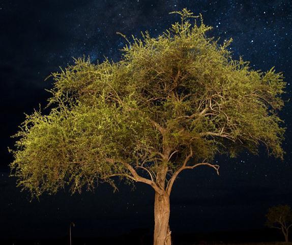 坦桑尼亚辛吉塔格鲁梅蒂保护区
