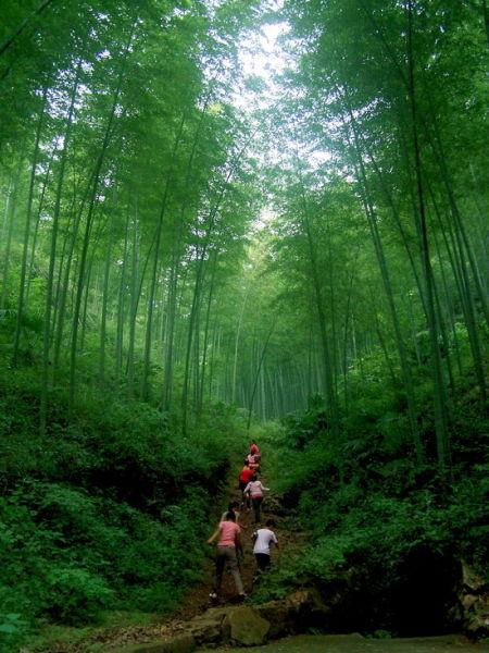 甜而不腻,风味独绝;   2,郎溪境内还有高井庙森林公园,同样是鸟鸣山幽
