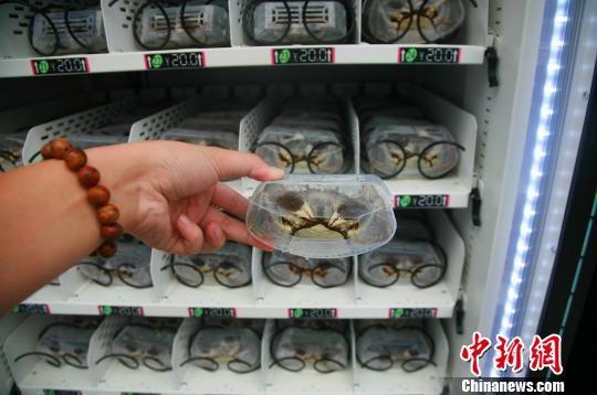 图为:大闸蟹自动售卖机内的螃蟹。 李晨韵 摄