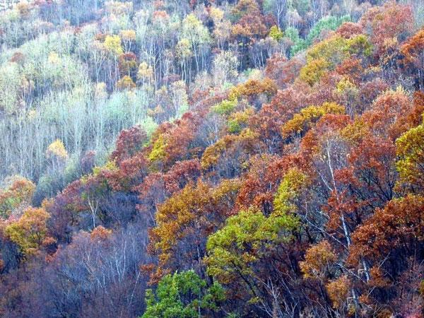 原始森林风景区外有公路与怀丰公路联接,南通怀柔,延庆,密云,北达