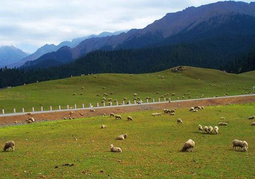 共筑中国梦  互动交流  大山,松树,草原,牛羊浑然天成的新疆大美风光.