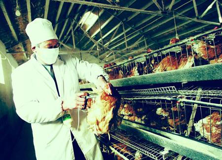 2013年冬,首例人感染H10N8死亡病例证明,H10N8是第九种能感染人的禽流感病毒。