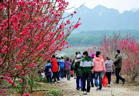 南宁花花大世界盛放的桃花盛吸引了众多前来观赏  方宏  摄影