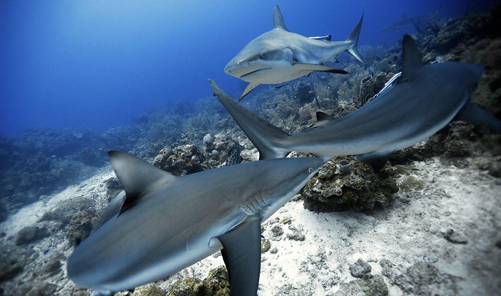 泰国夫妻自由潜水探秘深海 与鲨鱼共舞 粤语台