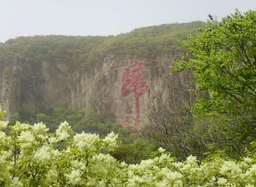 鲜花回归大自然的怀抱,中国梦早日实现!
