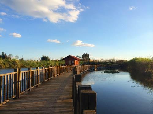 湿地作为昆明保护滇池的绿色屏障