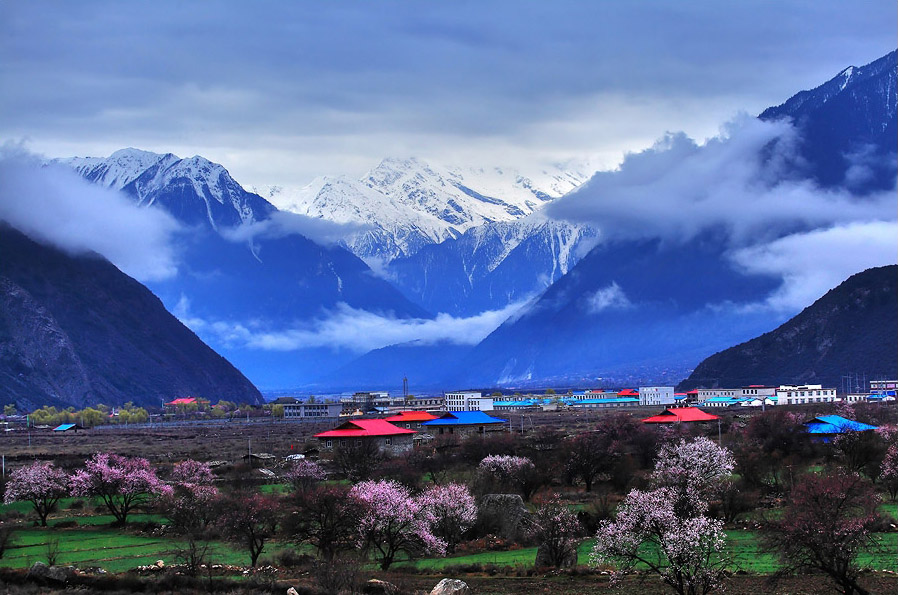 The 12th annual Peach Blossom Festival has just kicked off in Nyingchi County, Tibet Autonomous Region.