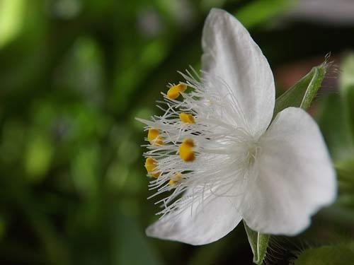 纯洁的小花
