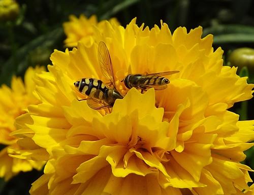 学习蜜蜂精神 团结共赢是我的梦想