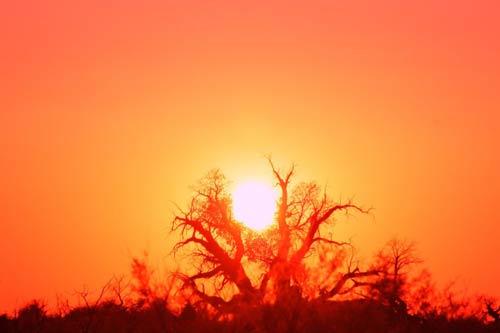 在夕阳的照耀下 它的千姿百态显得更加文雅优美