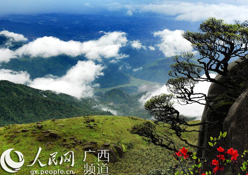 华南最大天然氧吧——国家森林公园姑婆山顶风景区