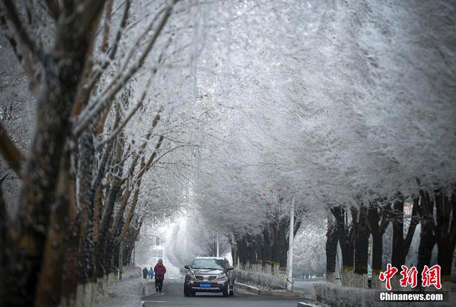 /乌鲁木齐城区出现大面积雾凇美景