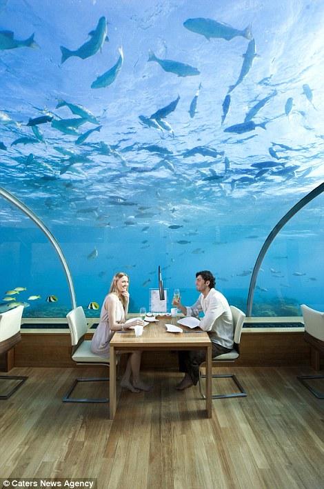 马尔代夫海底餐厅 与鲨鱼一起共享美食