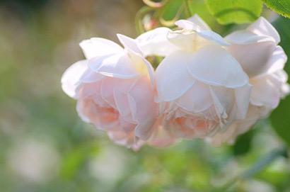 当下的付出,是明日的花开。(图片来源:资料图片)