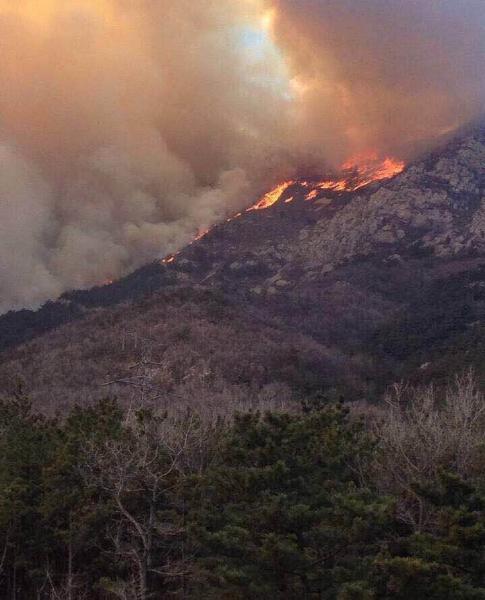 大连市金州开发区大黑山爆发山火