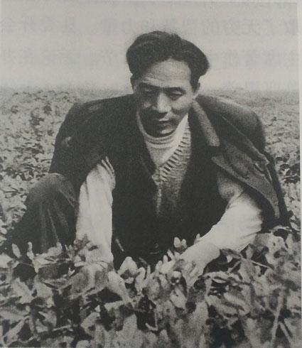 焦裕禄发现花生适合在兰考种植,因此大力推广。这是他在花生地拔草。