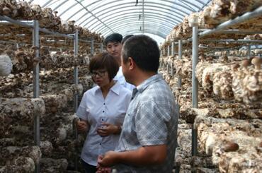 图:李二国(左一)深入大棚了解食用菌种植情况