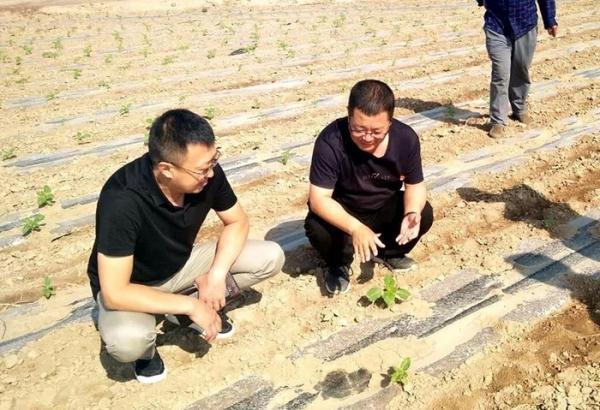 范瀚理(左一)到田间地头查看农作物生长情况。
