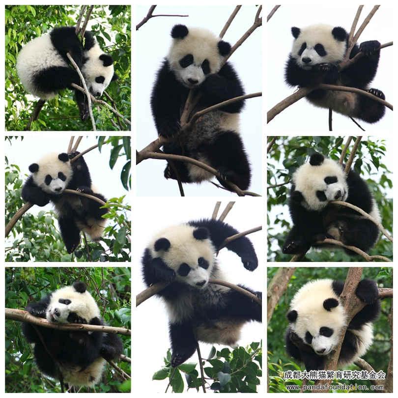 珍喜:放心,我是不会摔下来的!
