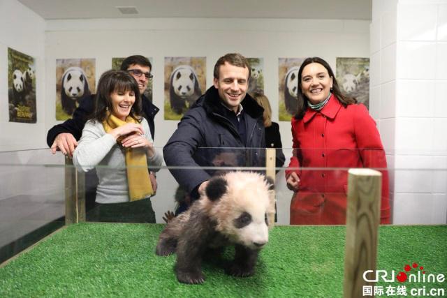 """法国总统马克龙看望熊猫幼仔""""圆梦"""""""