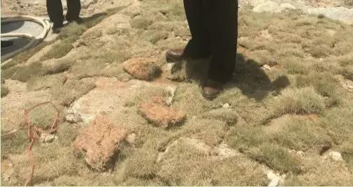 漳浦绿地建材贸易有限公司在混凝土上铺设草皮