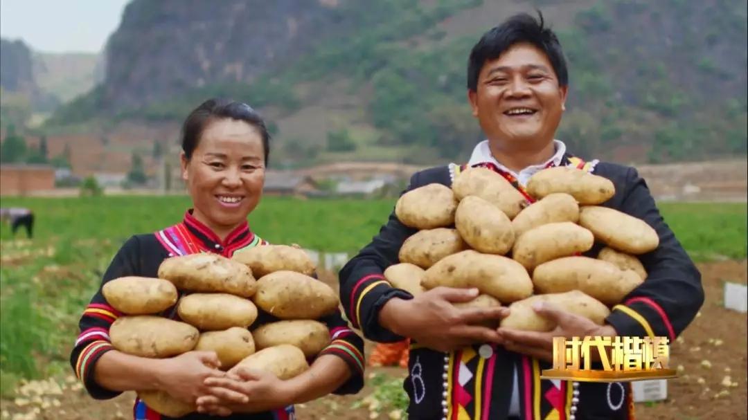 文中提及的土豆学名为马铃薯