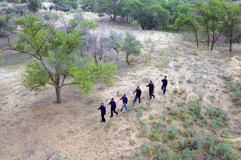 2019年8月23日,在甘肃省武威市古浪县八步沙林场,场长郭万刚(左一)和大家一起前往治沙点(无人机照片)。新华社记者 范培珅 摄