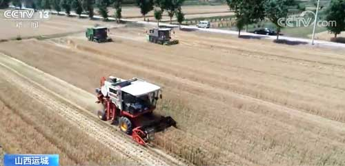 小麦夏收忙 山西运城:机械化作业确保颗粒归仓