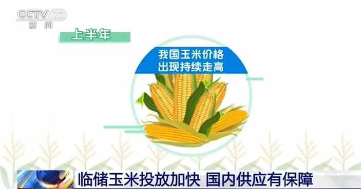购销玉米要保持理性 临储玉米涨价但是国内供应有保障
