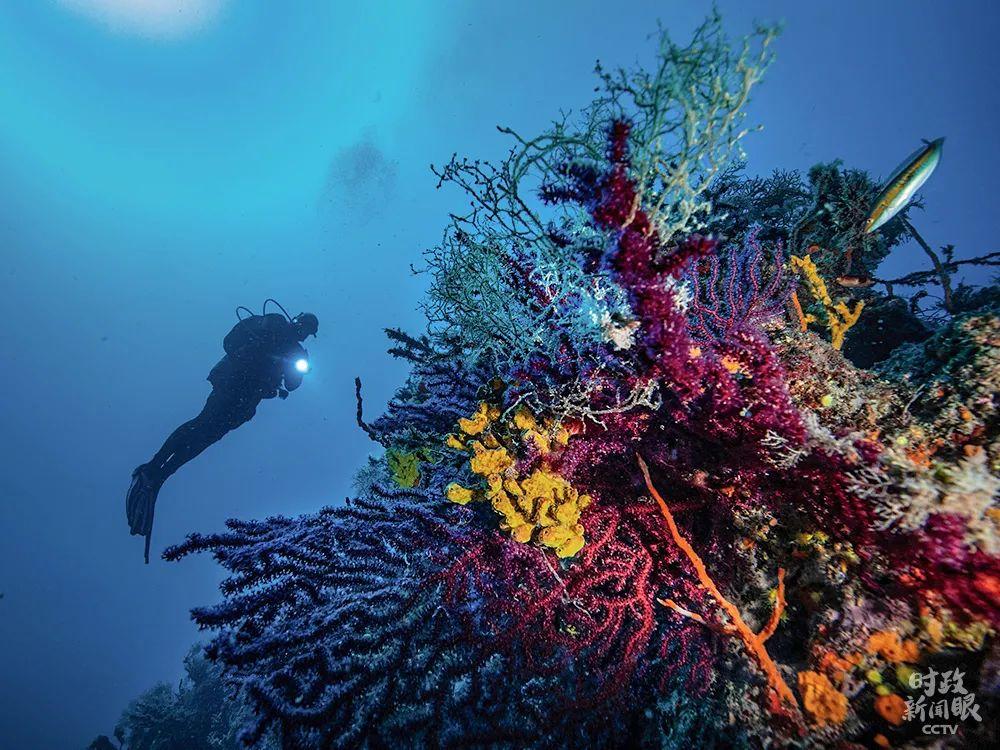 """5月22日是""""国际生物多样性日"""",位于土耳其艾瓦勒克群岛的海底珊瑚种类繁多,色彩斑斓。"""