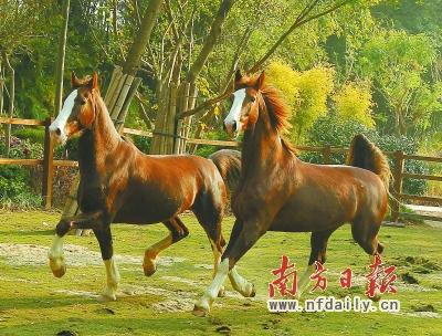 广州长隆野生动物世界面积为近万平方米的马园