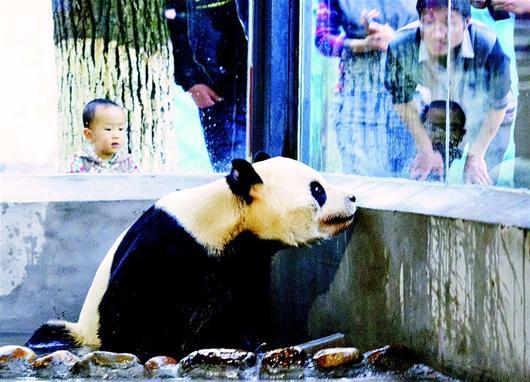 抵达宜昌市公园动物园熊猫馆将于5月1日与大家见面.