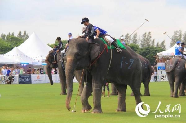 """第十三届""""国王杯""""大象马球赛在曼谷举行"""
