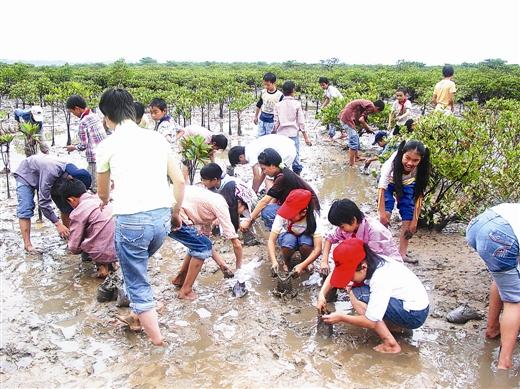 江山乡小学开展种植红树林活动.