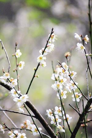 """忽然,耳边传来一稚嫩的童音:""""小燕子穿花衣,年年春天来这里."""