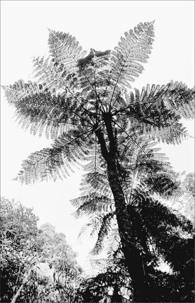 枯萎的树木矢量图