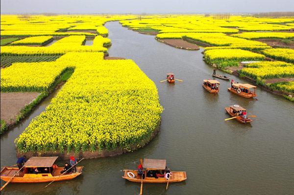 China busca que su tierra cultivable contaminada esté limpia en 2020