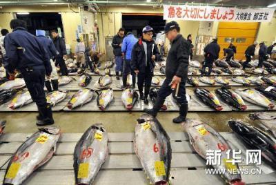 Japon : vente à prix record d´un thon bleu géant