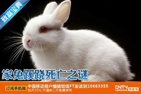 兔子养殖,家兔蹊跷死亡之谜