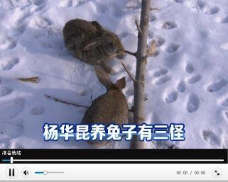 用树叶做小动物兔子