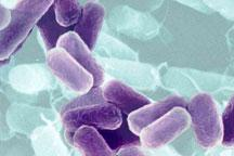 E. coli sweeping Europe identified as new strain