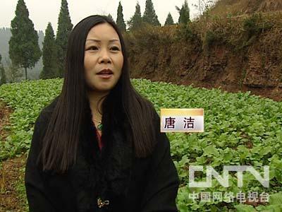 cctv7致富经养土鸡视频:养殖土鸡,唐洁,打工妹在