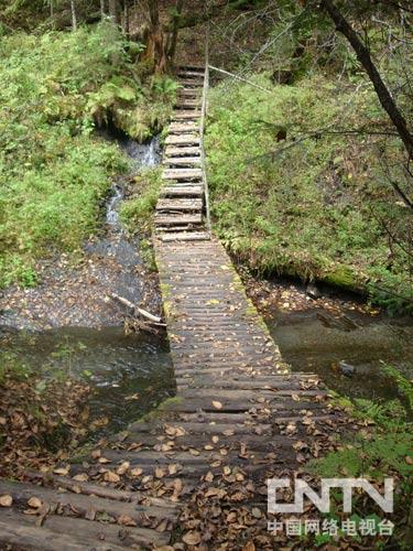 竖版森林小桥图片