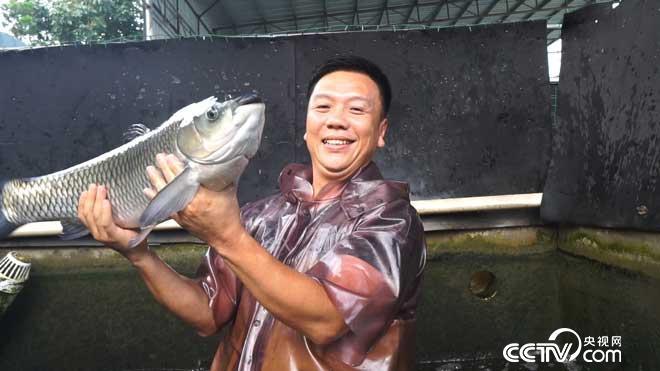 致富经:银行副行长辞职给鱼瘦身 年卖千万