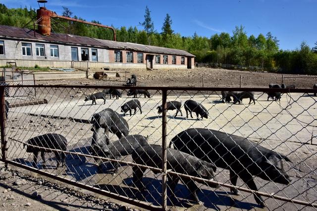 禁养区依法禁止的是规模以上养殖场所或有污染物排放的养殖场,并不是禁止所有的养殖行为。摄影/章轲